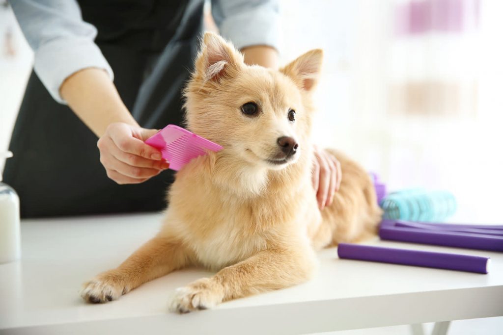 mobile pet grooming miami